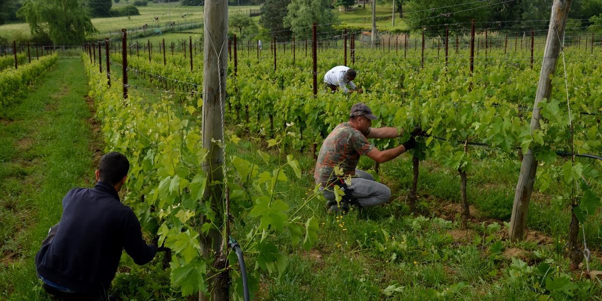 Gallery: immagini su Piè di Colle azienda vinicola toscana 32