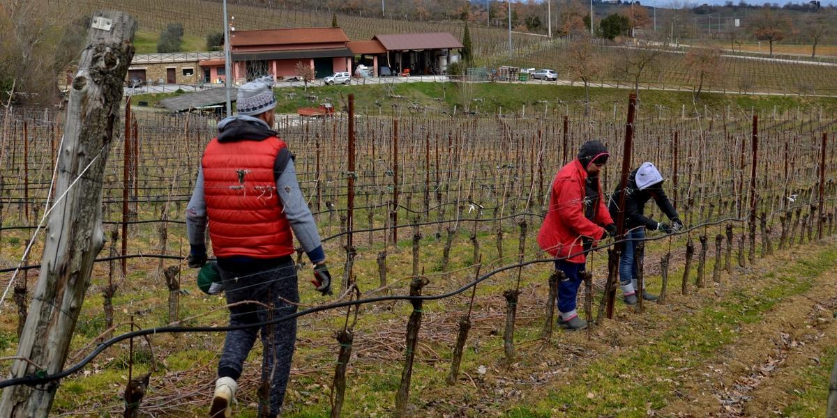 Gallery: immagini su Piè di Colle azienda vinicola toscana 34