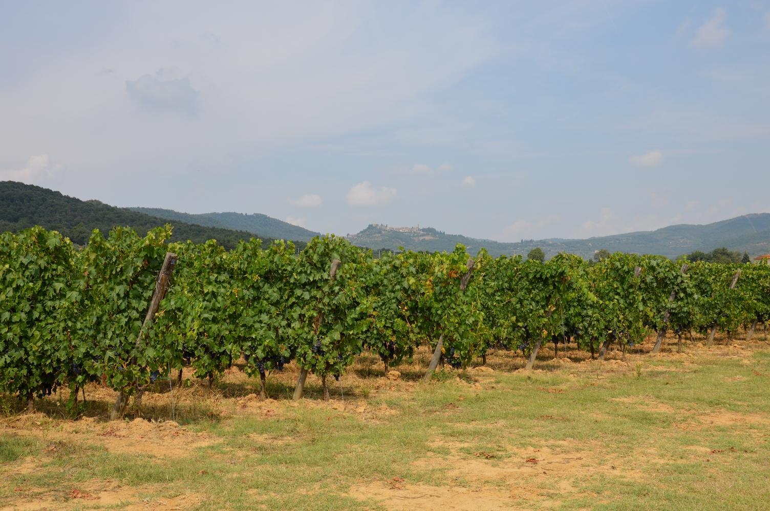 Gallery: immagini su Piè di Colle azienda vinicola toscana 31