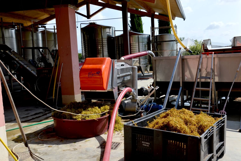 """Chi siamo: Informazioni sull'azienda vinicola """"Piè di Colle"""" 12"""