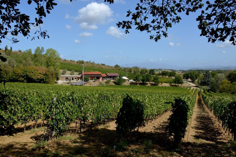 Gallery: immagini su Piè di Colle azienda vinicola toscana 3