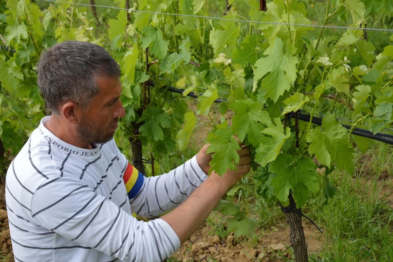 Gallery: immagini su Piè di Colle azienda vinicola toscana 6