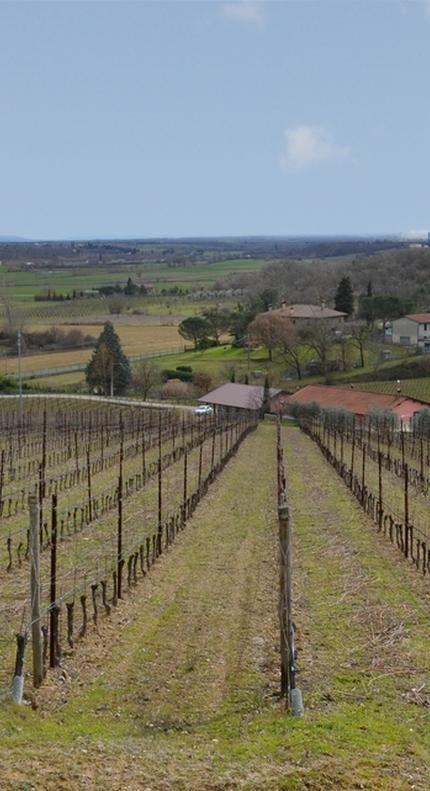 La Val di Chiana: l'area dove produciamo i nostri vini 4