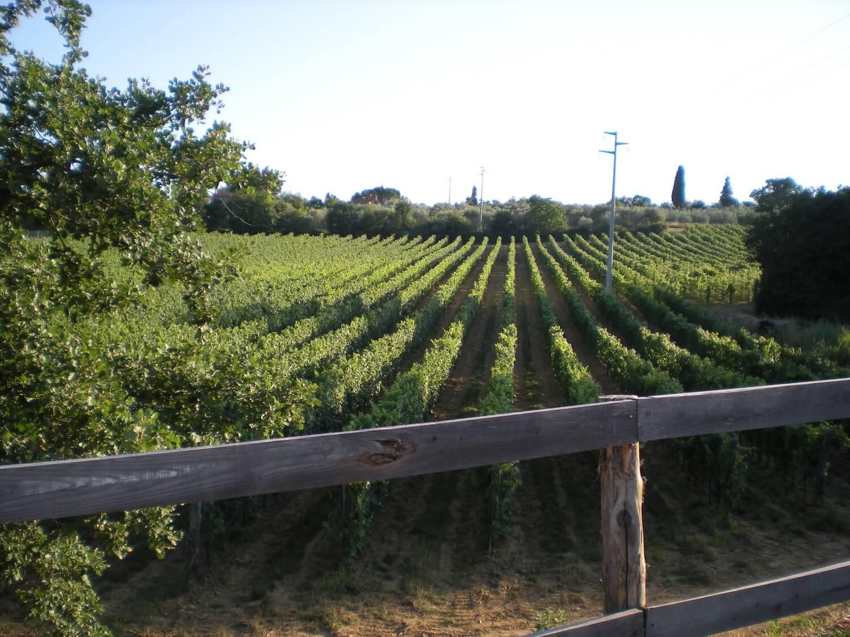Gallery: immagini su Piè di Colle azienda vinicola toscana 24