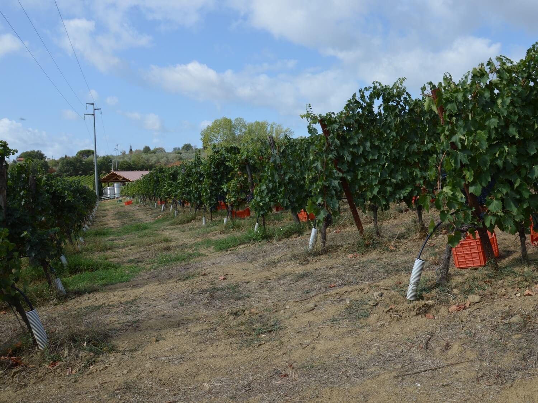 Gallery: immagini su Piè di Colle azienda vinicola toscana 25