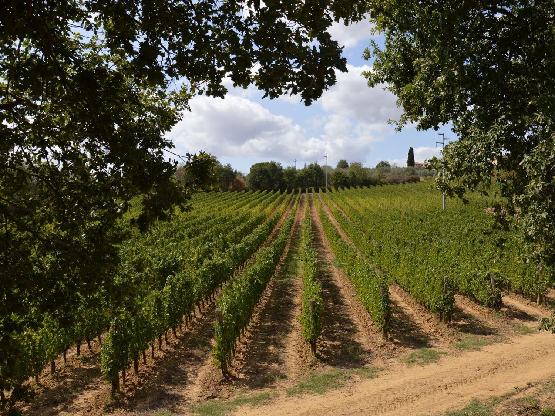 Gallery: immagini su Piè di Colle azienda vinicola toscana 27