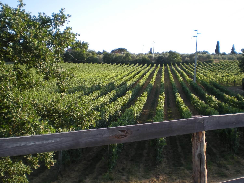 Gallery: immagini su Piè di Colle azienda vinicola toscana 29