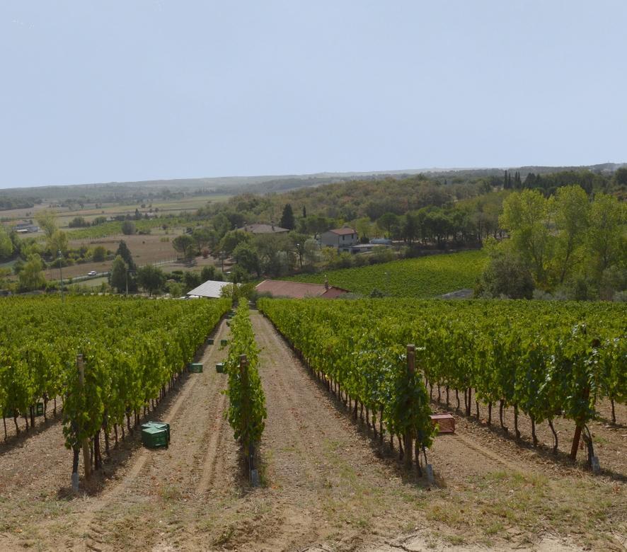La Val di Chiana: l'area dove produciamo i nostri vini 3