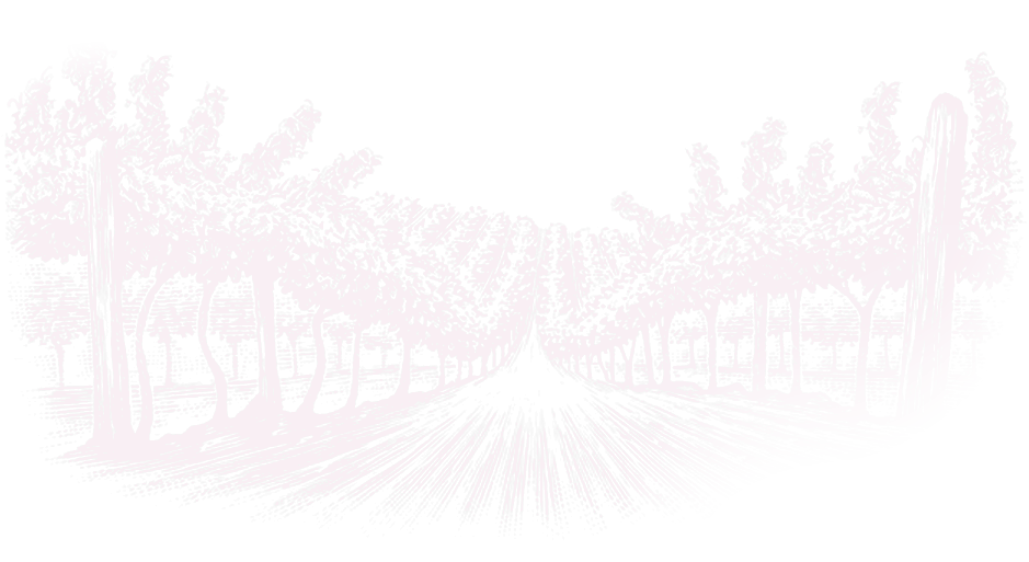 I Vigneti di Piè di Colle: Sangiovese, Merlot e Cabernet 2