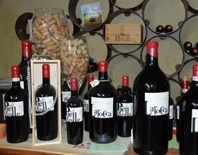 Gallery: immagini su Piè di Colle azienda vinicola toscana 21