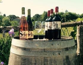 Gallery: immagini su Piè di Colle azienda vinicola toscana 23