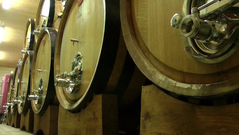 Gallery: immagini su Piè di Colle azienda vinicola toscana 12