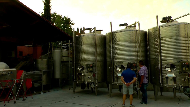 Gallery: immagini su Piè di Colle azienda vinicola toscana 59