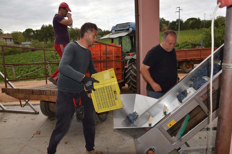Gallery: immagini su Piè di Colle azienda vinicola toscana 49