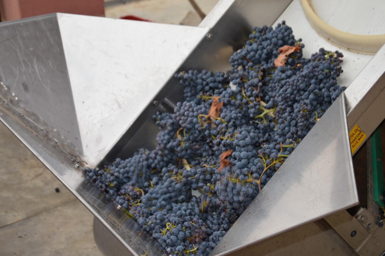 Gallery: immagini su Piè di Colle azienda vinicola toscana 50