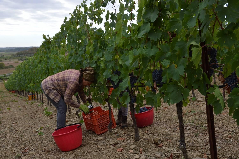 Gallery: immagini su Piè di Colle azienda vinicola toscana 39