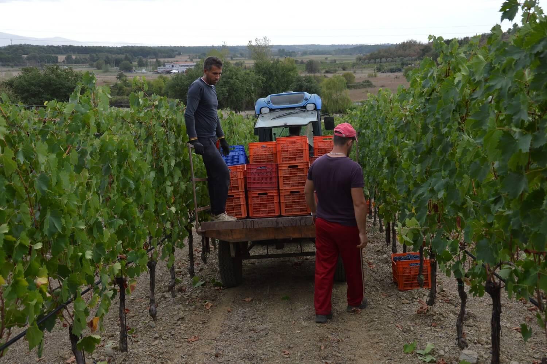 Gallery: immagini su Piè di Colle azienda vinicola toscana 44