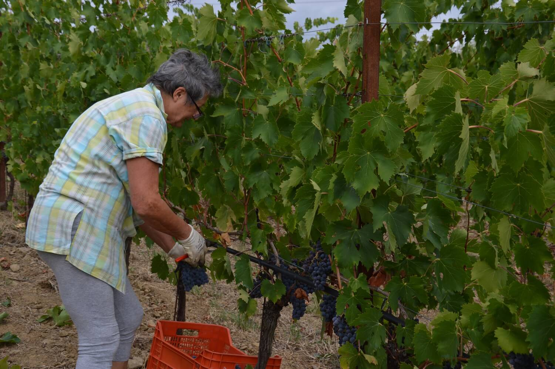 Gallery: immagini su Piè di Colle azienda vinicola toscana 40