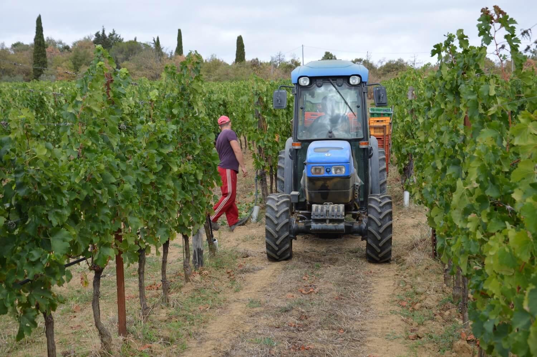Gallery: immagini su Piè di Colle azienda vinicola toscana 46