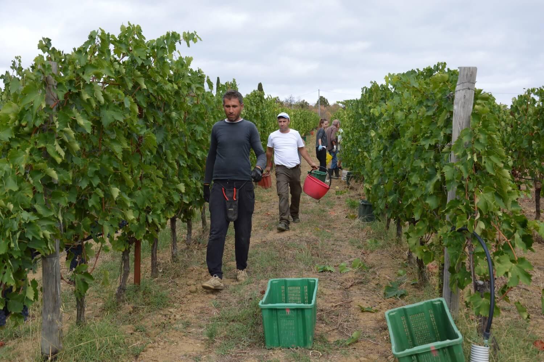 Gallery: immagini su Piè di Colle azienda vinicola toscana 43