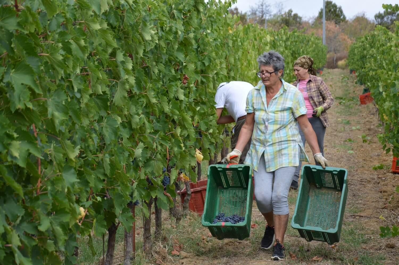 Gallery: immagini su Piè di Colle azienda vinicola toscana 9